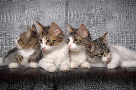 Four kittens of two months Stock Photo - 11139466