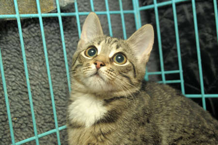 Striped kitten in a cage photo