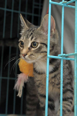 Striped kitten in a cage Stock Photo - 11996748