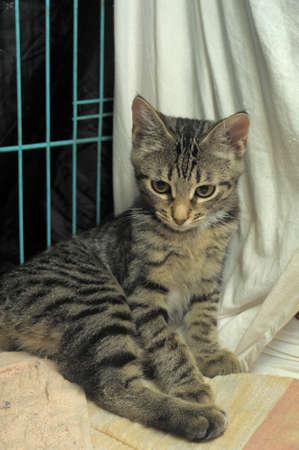eye catcher: Striped kitten in a cage
