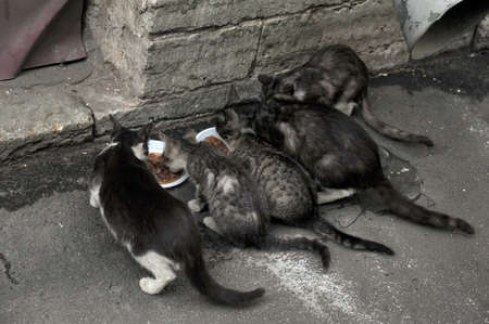 homeless cats eat photo