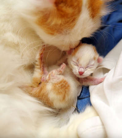 cat sleeping: cat with newborn kitten