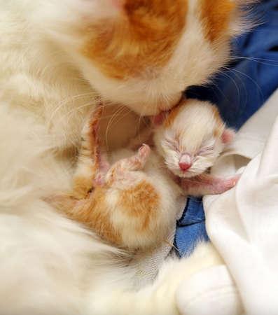 cat grooming: cat with newborn kitten