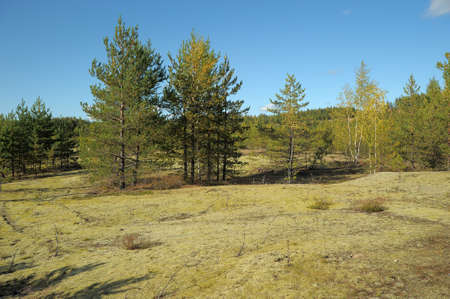 Autumn forest Stock Photo - 11994071