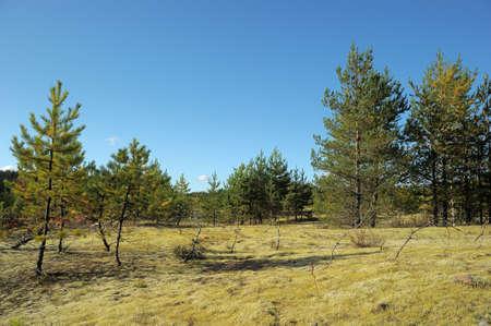 Autumn forest Stock Photo - 11994069