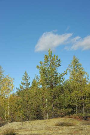 Autumn forest  Stock Photo - 11994068