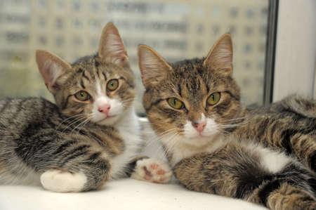 근처 두 개의 줄무늬 고양이