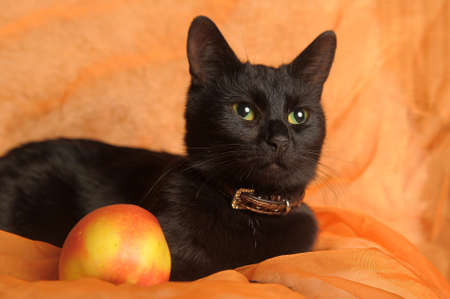 nose close up: black cat with apple on an orange background