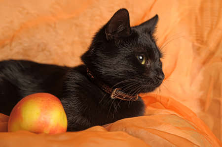 black cat with apple on an orange background Stock Photo - 13683669
