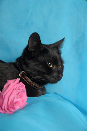 Black cat with a rose  photo