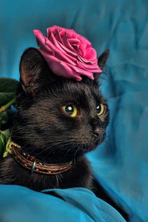 rosa negra: Gato negro con una rosa Foto de archivo