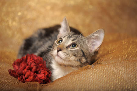 Gray tabby cat with flowers photo