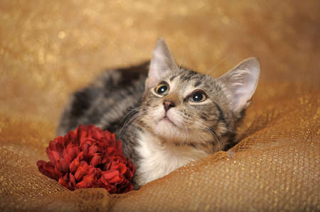 Gray tabby cat with flowers Stock Photo - 13562856