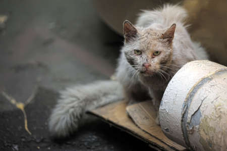 piteous: Another portrait of the miss fortune homeless animal