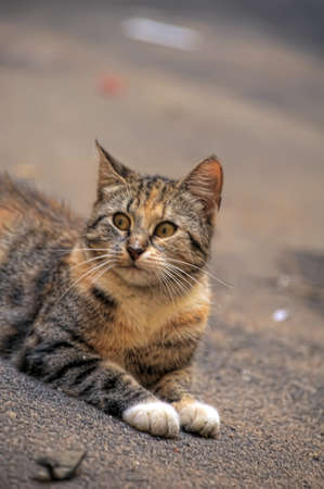 lugubrious: cat on the street Stock Photo