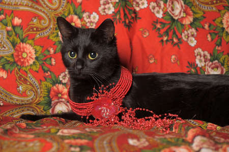 moggi: black cat on the Russian national scarf Stock Photo