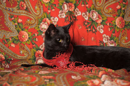 black cat on the Russian national scarf Stock Photo - 11545184