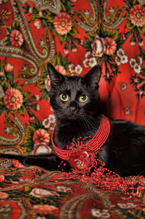 black cat on the Russian national scarf Stock Photo - 11476568