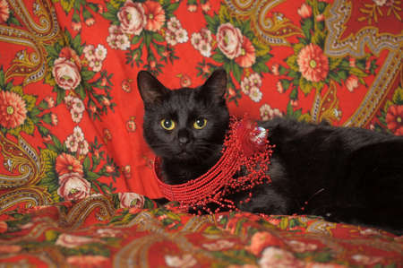 black cat on the Russian national scarf Stock Photo - 11476570
