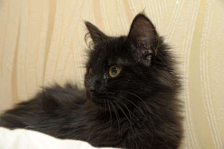 Black kitten photo