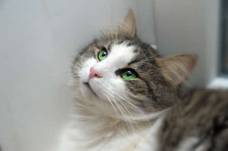 cat with green eyes Stock Photo - 11320776