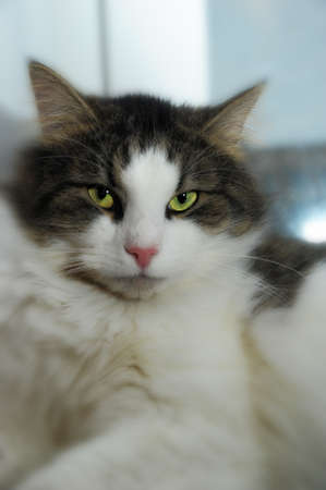Cat with green eyes Stock Photo - 13326070