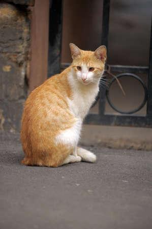 catnap: ginger cat on the street homeless