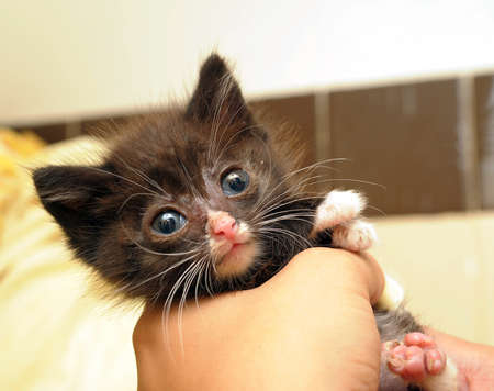 little sick kitten with big eyes photo