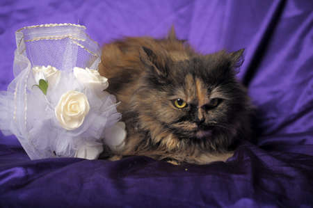Persian cat and a wedding bouquet photo