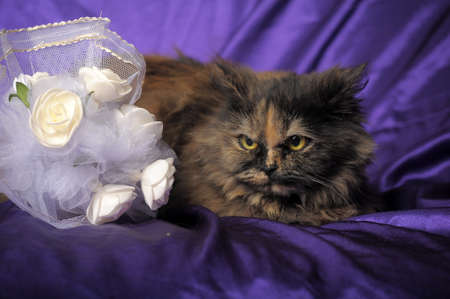 Persian cat and a wedding bouquet Stock Photo - 11358194