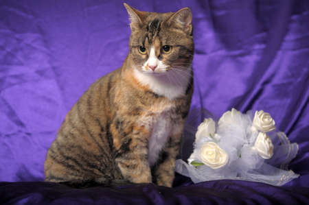 cat and wedding bouquet photo