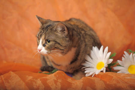 cat and daisies photo