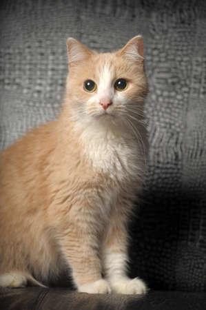 sentarse: De color amarillo pálido gato