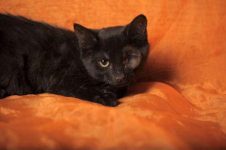 one-eyed kitten Stock Photo - 13552525