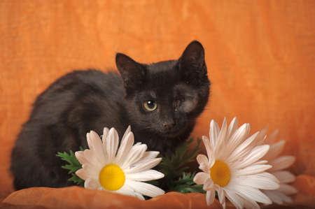 one-eyed kitten Stock Photo - 13552501