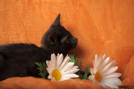 one-eyed kitten Stock Photo - 13552508