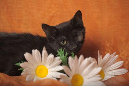 one-eyed kitten Stock Photo - 13552499
