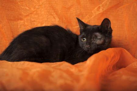 one-eyed kitten photo