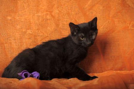 one-eyed kitten Stock Photo - 13552513
