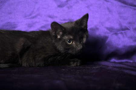 one-eyed kitten Stock Photo - 13552526