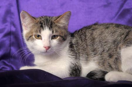 whiskar: Cute kitten