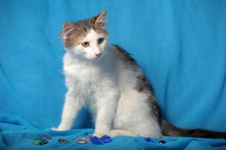 whiskar: Waiting kitten