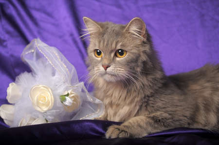 gray fluffy cat and a wedding bouquet photo