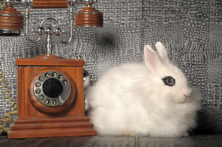 white rabbit and a retro phone Stock Photo - 11358274