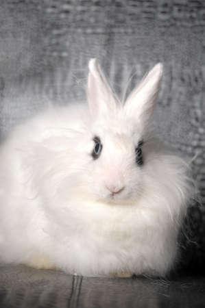white rabbit Stock Photo - 11358408