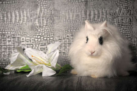 white rabbit and a lily flower photo