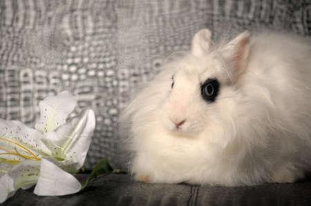 weißes Kaninchen und eine Lilie Blume
