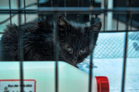 sick kitten isolated in cell photo
