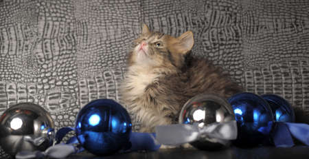 Kitten with Christmas Decorations photo