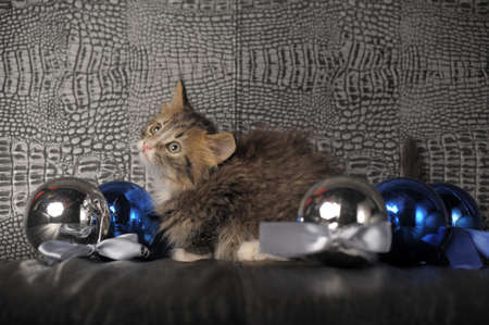 Kitten with Christmas Decorations Stock Photo - 13571651